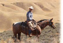 Cattlemans corner Austin Snedden