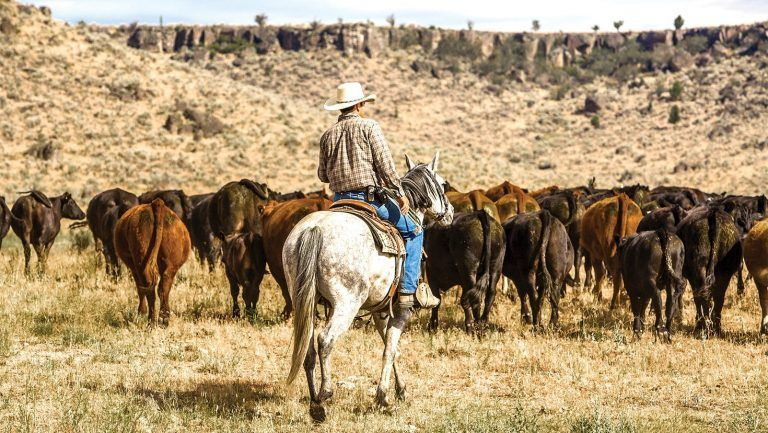 Tariffs on Mexican Cattle Will Restore Lost Opportunities for U.S. Cattle Producers