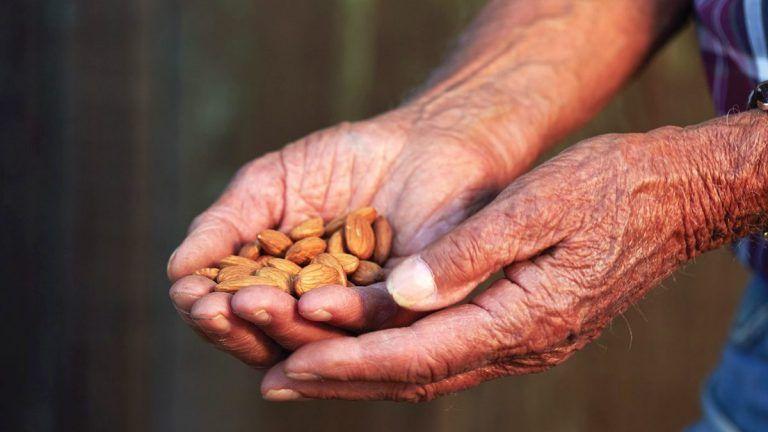 USDA Forecasts California Almond Crop Down 3.5 Percent