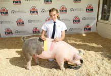 pig at Kern County Fair