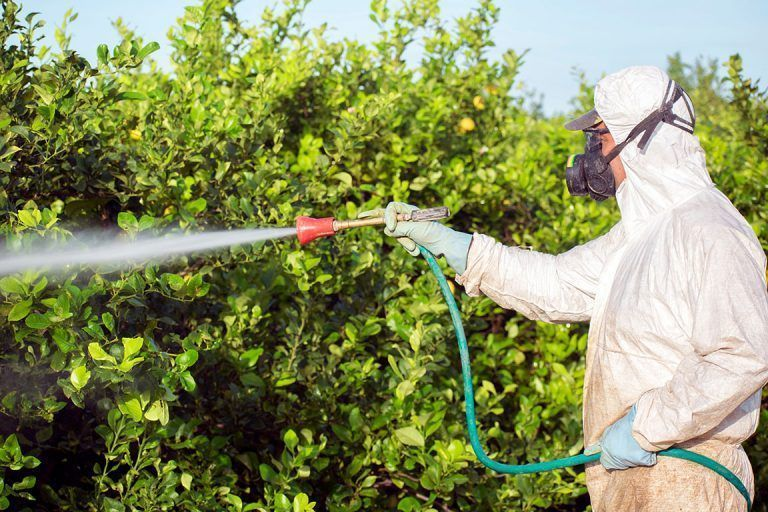 State Tests Show Low or No Pesticide Levels in Most Fruits and Vegetables in California