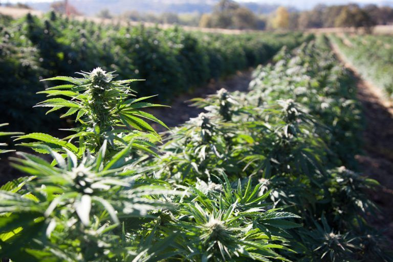 Federal Regulations Impacting Hemp Industry with Greater Uncertainty