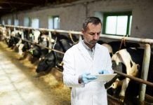 Farm worker using digital tablet while working with cows at modern dairy factory (Photo by Pressmaster / Shutterstock.com)