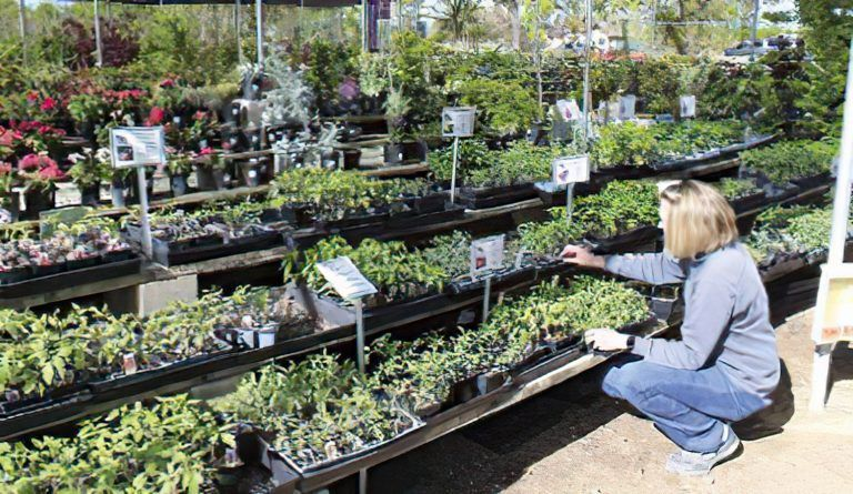 Plant Nurseries See Sharp Shift in Sales Patterns