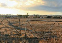 Panoramic view of dry, drought-stricken farmland. (Photo by f.ield of vision / Shutterstock.com)