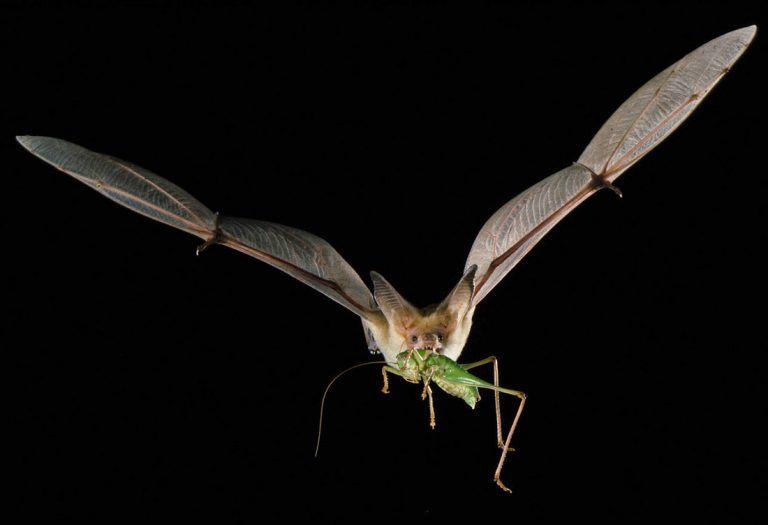 Don't Blame the Bats!