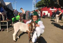 girl with lamb at Kern County Fair