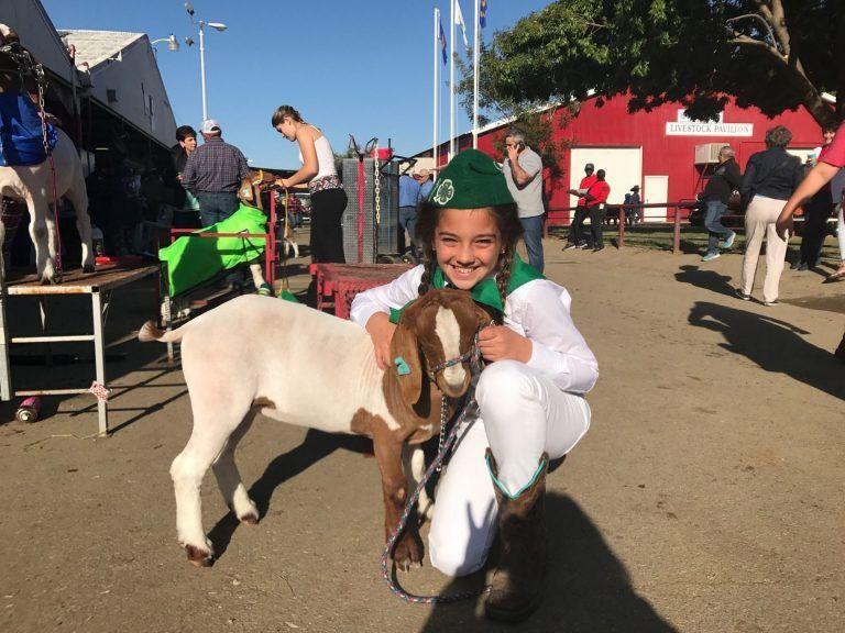 The Plan for Kern County Fair Livestock