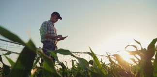 farmer in field inspecting irrigation
