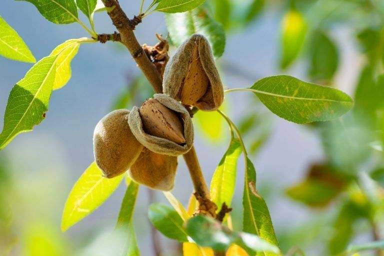 Famoso Nut Employee Chad DeRose Elected to Almond Board of California