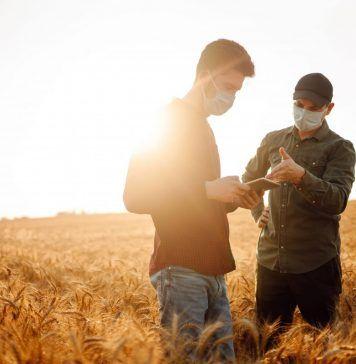 Farmers in a wheat field taking precautions against COVID-19