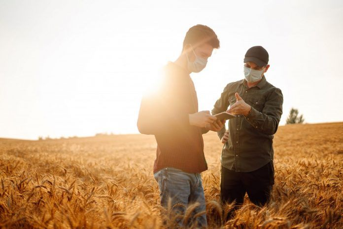Farmers in a wheat field taking precautions against COVID-19