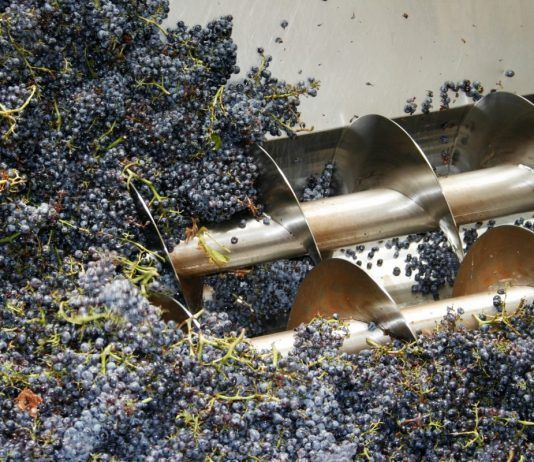 wine grapes being processed