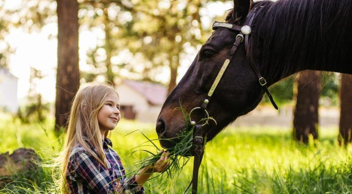 girl feeds a horse sitting outdoors in the tall grass