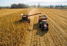 Harvesting corn in autumn Aerial skyline shot