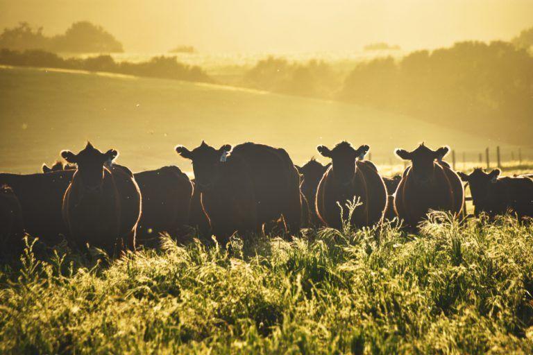 USDA Announces Changes to Livestock Gross Margin Insurance Program