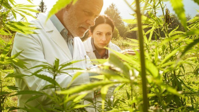 Streamlining Efficiency in Hemp Harvest with New Approaches, Technologies
