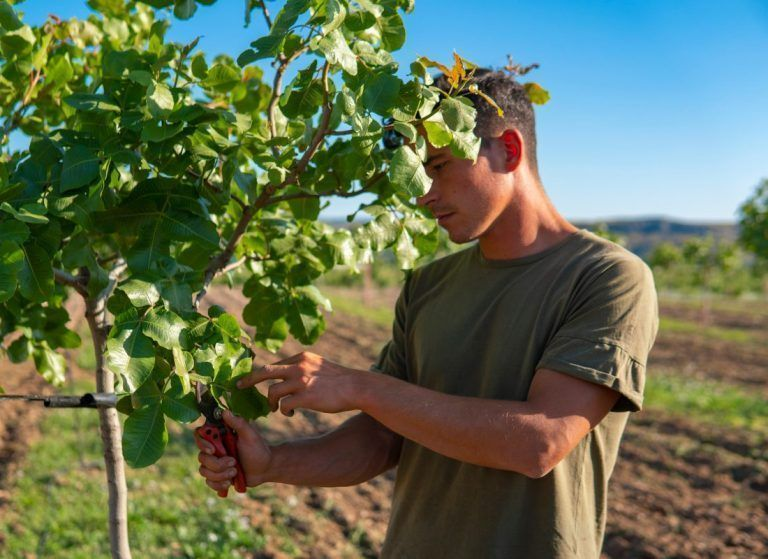 American Pistachio Growers Expands Marketing Efforts Ahead of Expected Record 2020 Crop