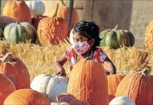 child playing in pumpkin patch