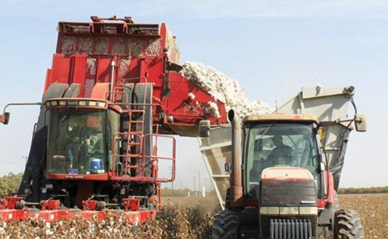 Cotton Farmers Look for Market Stability