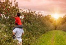 family picking apples