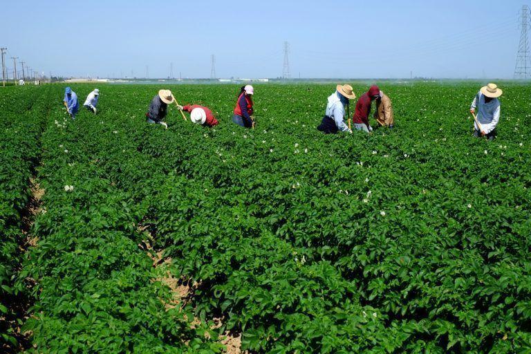 USDA to Discontinue Ag Labor Survey