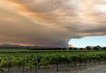 vineyard wild fire