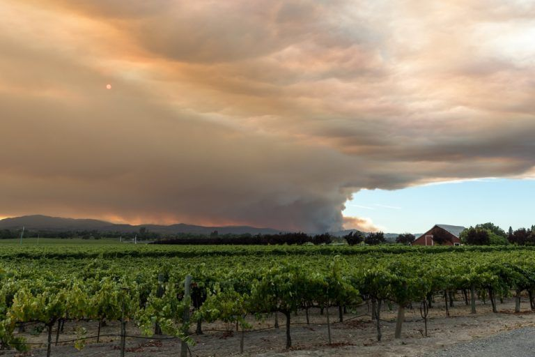 Wildfires Bring Uncertainties for Grape Growers