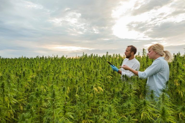 Hemp Industry Developments a Mixed Bag for Operators, Growers in 2021