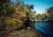 Kern River between the bluffs with wildflowers and riparian habitat