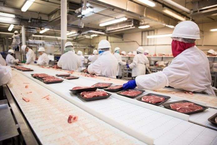 Workers handle meat organizing packing shipping loading at factory plant.