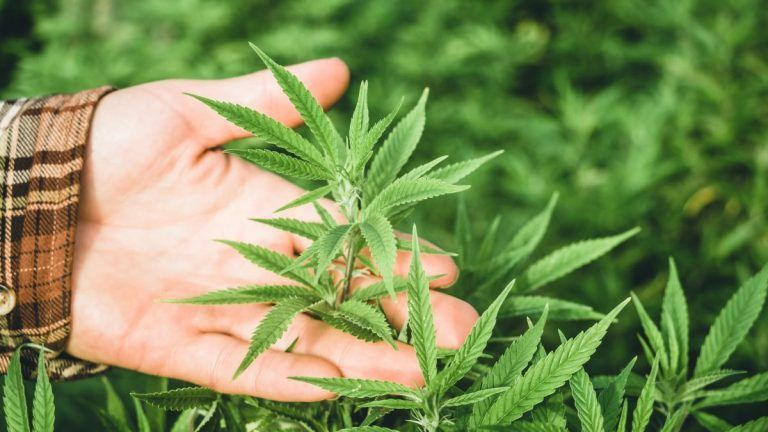 Hemp Takes Center Stage at 2021 World Ag Expo Online