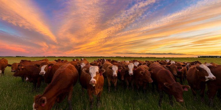 Imports of Cattle and Beef Hit Historical High in 2020