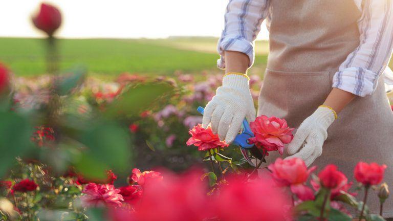 Valentine's Demand Buoys Flower Business