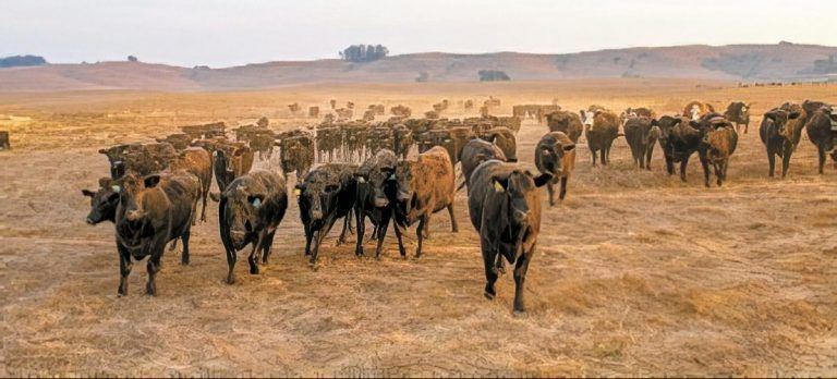 Lack of Processing Hampers the Organic Meat Business
