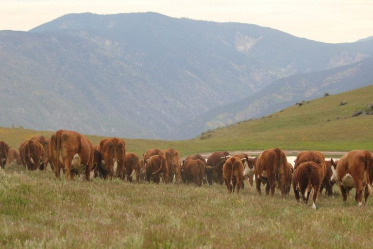 The Cattleman's Corner: Drafting Genetic Quality in You