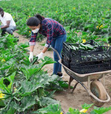 farmworkers wearing COVID masks