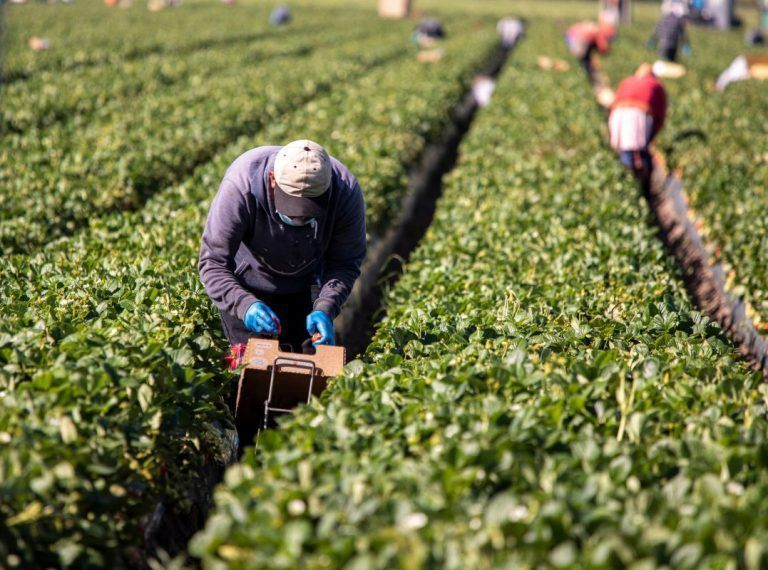 California Farm Bureau Supports Reintroduction of Agricultural Immigration Bill