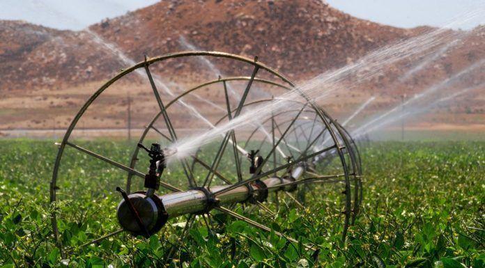 Irrigation sprinklers watering Southern Californian field