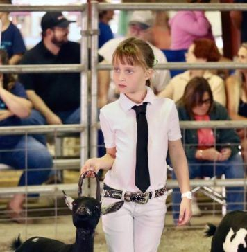 Paisley Williams and her dairy goat, Twinkle, focus in on the judge during a showmanship class at the Kern County Fair