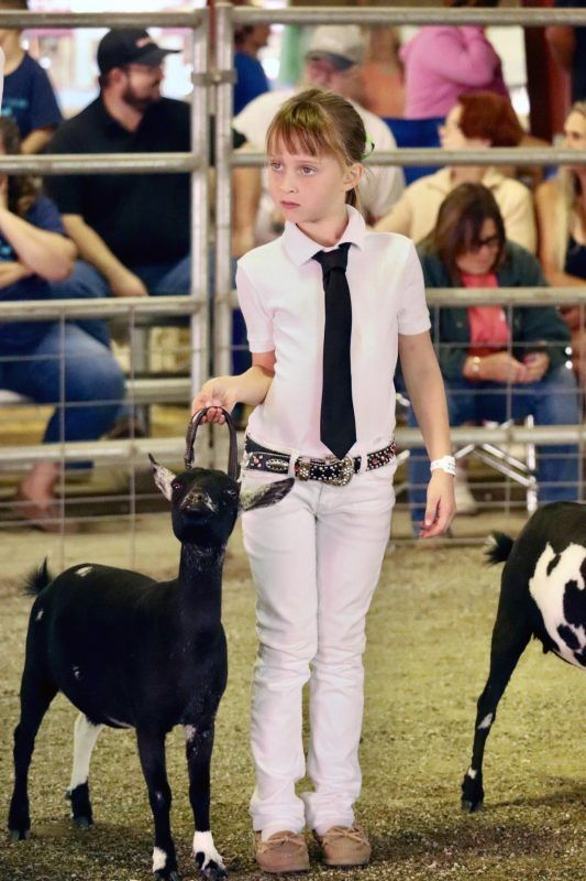 Livestock Show is A-Go, but 2021 Fair is Cancelled