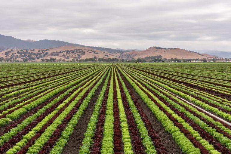 Farm Bureau President Urges Additional Flexibility in Conservation Programs