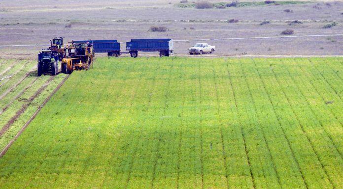 farm in Kern County