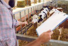 livestock identification