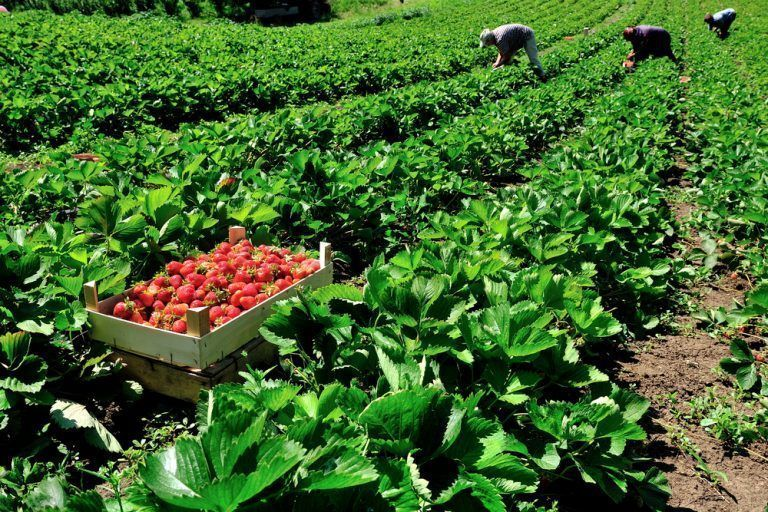 State Monitoring Confirms Low or No Pesticide Residues in Most Fruits and Vegetables