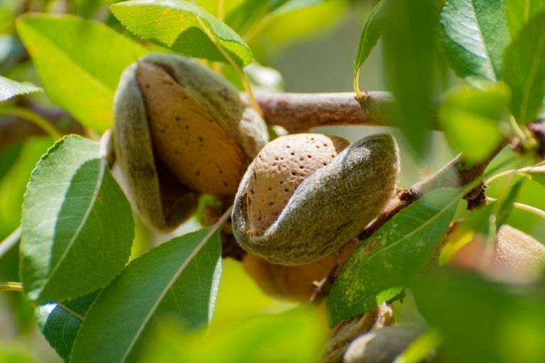 Increased Demand Helps Almonds Overcome Port Issues, Tariffs and COVID-19 Limitations