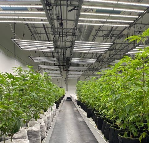 This state-licensed indoor cannabis cultivation facility utilizes energy efficiency LED lighting and produces plants in soil as a growing medium