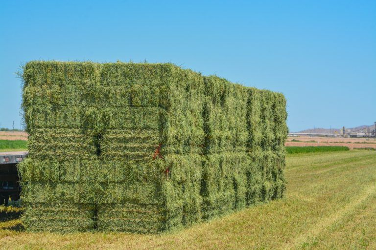 Livestock Owners See Hay Supplies Cut Due to Drought