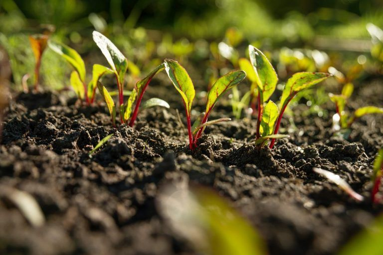 CDFA Awards $2.7 Million in Technical Assistance Funding to Support the Healthy Soils and State Water Efficiency and Enhancement Programs