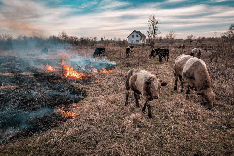 Efforts Mount to Save Livestock From Wildfires